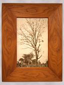 view Framed Photograph of an American Black Walnut Tree digital asset number 1