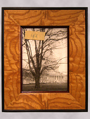 view Framed Photograph of a White Ash Tree digital asset number 1