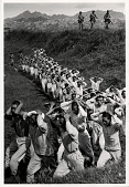 view North Korean soldiers taken by U.S. Marines during the fighting for Yong Dong digital asset: North Korean soldiers taken by US Marines and marched to the rear