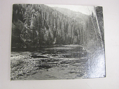 view photograph, pine tree forest-river digital asset number 1