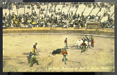 view Bull Fight, Removing the Bull, C. Juarez, Mexico digital asset number 1