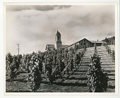 view Franciscan Mission in Southern California digital asset: Franciscan Mission in Southern California
