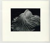 view Cabbage Leaf digital asset: Photograph by Edward Weston, 1931, Cabbage Leaf