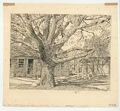 view Oak & Old House in Spring, E. Hampton digital asset: Oak & Old House in Spring, E. Hampton
