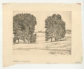 view Hickories in Hayfield digital asset: Hickories in Hayfield