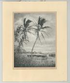 view Hawaiian Landscape digital asset: Bromoil print, Hawaiian Landscape