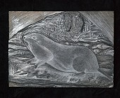 """view Engraved woodblock of the """"Thomomys clusius"""" or Wyoming Pocket Gopher digital asset: Engraved woodblock of the Thomomys Clusius (prairie dog)"""