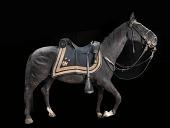 "view General Sheridan's Horse ""Winchester"" AKA ""Rienzi"" digital asset number 1"