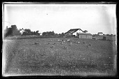 """view Walter J. Hussey's """"Greenwood Farm"""" in Mt. Pleasant, Ohio digital asset: Positive image from a glass plate negative by Walter J. Hussey, Greenwood Farm"""