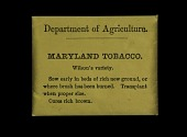 view USDA Tobacco Seed Packets digital asset number 1