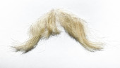 view false moustache worn by James Whitmore as Oliver Wendell Holmes digital asset: Mustache worn by James Whitmore in The Magnificent Yankee