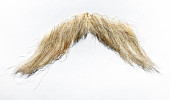 view false mustache worn by James Whitmore as Oliver Wendell Holmes digital asset: Mustache worn by James Whitmore in The Magnificent Yankee