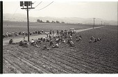 view Braceros at Meal Time digital asset: Braceros sit on the edge of a field in the Salinas Valley, California, and have lunch.