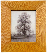 view Framed Photograph of a Blue Ash Tree digital asset number 1
