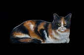 view Cat Painting from Julia Child's Kitchen digital asset number 1