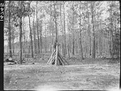 view A Triangular Woodpile in Millsboro, Delaware digital asset: A Triangular Woodpile in Millsboro, Delaware