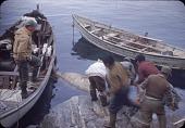 view Walrus hunt near Padloping, Island digital asset: S04822