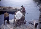 view Walrus hunt near Padloping, Island digital asset: S04823