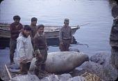 view Walrus hunt near Padloping, Island digital asset: S04824