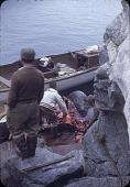 view Walrus hunt near Padloping, Island digital asset: S04826