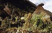 view Kogi (Kagaba) dwellings and gardens digital asset: Kogi (Kagaba) dwellings and gardens