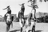 view Three masked performers, one wearing male horizontal Chi wara headdress, the other two wearing double-headed horizontal Chi wara headdresses, each referred to as n'gonzon koun, Bamako (national district), Mali digital asset: Three masked performers, one wearing male horizontal Chi wara headdress, the other two wearing double-headed horizontal Chi wara headdresses, each referred to as n'gonzon koun, Bamako (national district), Mali