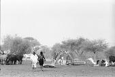 view Zebu cattle and dromedary camels, Abouza, Zinder-Tanout region, Niger digital asset: Zebu cattle and dromedary camels, Abouza, Zinder-Tanout region, Niger