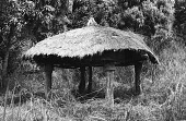 view Thatched roof shelter of a Zande family. Gangala-Na-Bodio, Congo (Democratic Republic) digital asset: Thatched roof shelter of a Zande family. Gangala-Na-Bodio, Congo (Democratic Republic)