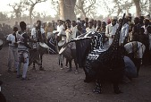view Cheko performance - masqueraded puppet of large animal, Inland Delta region, Mali digital asset: Masquerades