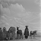 view Xhosa Woman With Her Donkeys, Transkei digital asset: Xhosa Woman With Her Donkeys, Transkei