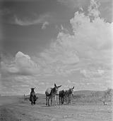 view Xhosa Woman With Her Donkeys, Transkei digital asset: Transkei Woman With Her Donkeys