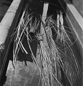 view Bundles of Straw In Tub digital asset: Bundles of Straw In Tub