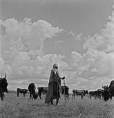 view Sotho Cattle Herder digital asset: Sotho Cattle Herder
