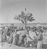 view San men tending cattle, Kalahari Desert, Botswana digital asset: San men tending cattle, Kalahari Desert, Botswana