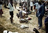 view Goat and sheep selling section at Afikpo Eke market, Afikpo Village-Group, Nigeria digital asset: Goat and sheep selling section at Afikpo Eke market, Afikpo Village-Group, Nigeria