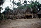 view Men's secret society ajaba dressing house of Amozo ward, Mgbom village, Afikpo Village-Group, Nigeria digital asset: Men's secret society ajaba dressing house of Amozo ward, Mgbom village, Afikpo Village-Group, Nigeria