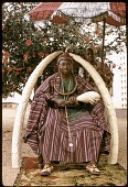 view Oba Olateru Olagbegi II, the Olowo of Owo, seated beneath carved ivory tusks, Owo, Nigeria digital asset: Oba Olateru Olagbegi II, the Olowo of Owo, seated beneath carved ivory tusks, Owo, Nigeria