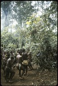 view Dance celebration among the Mbuti people, Ituri Forest, near Beni, Congo (Democratic Republic) digital asset: Dance celebration among the Mbuti people, Ituri Forest, near Beni, Congo (Democratic Republic)