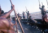 view Joint canoeing to the fish-traps in the cataracts, near Kisangani, Congo (Democratic Republic) digital asset: Joint canoeing to the fish-traps in the cataracts, near Kisangani, Congo (Democratic Republic)