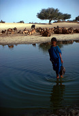view Girl wading with dromedary camels on the riverbanks, Tombouctou, Mali digital asset: Girl wading with dromedary camels on the riverbanks, Tombouctou, Mali