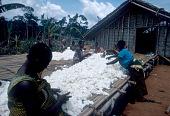 view Mangbetu women removing seeds from cotton pods, Mongomasi village, Congo (Democratic Republic) digital asset: Mangbetu women removing seeds from cotton pods, Mongomasi village, Congo (Democratic Republic)
