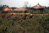 view Thatched roof dwellings and shelter of a Zande family unit, Gangala-Na-Bodio, Congo (Democratic Republic) digital asset: Thatched roof dwellings and shelter of a Zande family unit, Gangala-Na-Bodio, Congo (Democratic Republic)