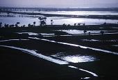 view Nile River flooding the fields, near Al Uqsur, Egypt digital asset: Nile River flooding the fields, near Al Uqsur, Egypt