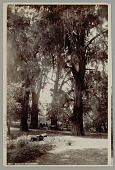 view Man with Horses and Coach Inside Grove of Trees n.d digital asset number 1