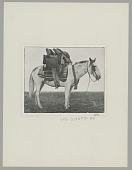 view Argentine Horse Loaded with Household Goods digital asset: Argentine Horse Loaded with Household Goods
