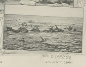view Seals, Swimming and Sunning 1890 digital asset number 1