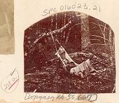 view Child Sleeping in Hammock Suspended Between Two Trees digital asset: Child Sleeping in Hammock Suspended Between Two Trees