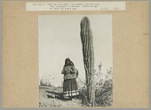 view Woman in Native Dress, Carrying Pitch-Covered Basket Jug Attached to Tumpline, Next to Large Cactus 1907 digital asset number 1