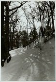 view Roadway in cemetery with snow DEC 1969 digital asset number 1