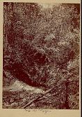 view View of Gorge and Dense Vegetation in Tropical Forest 1870 digital asset number 1
